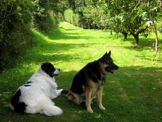 Dogs2007_2