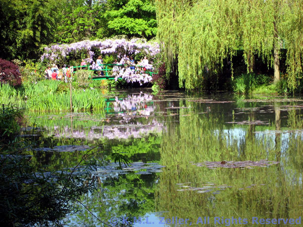 Wisteria_bridge_pond